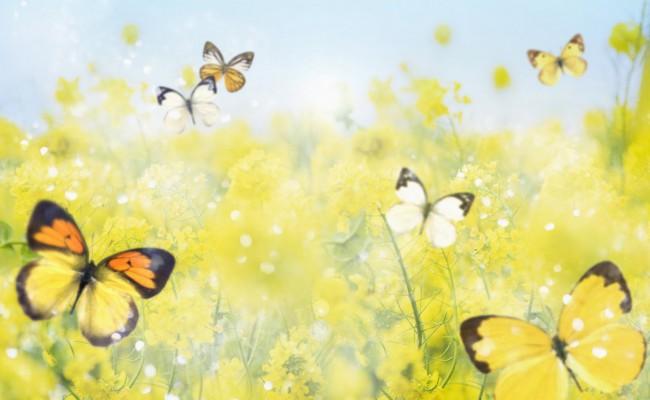 Butterfly-Wallpaper-6