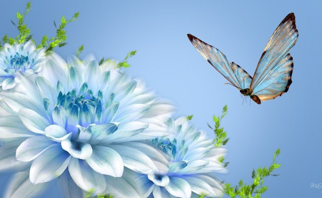 Flower-And-Butterfly-Wallpapers-8jxxm-Free
